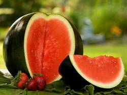 Watermelon cultivation cultivation