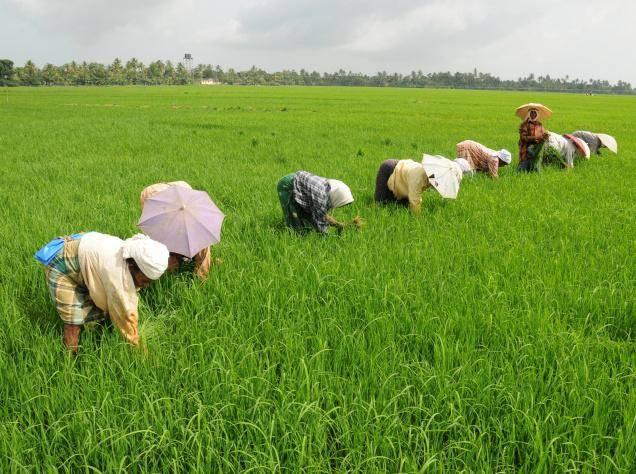 Farming odd kin in patchy anthropocenes