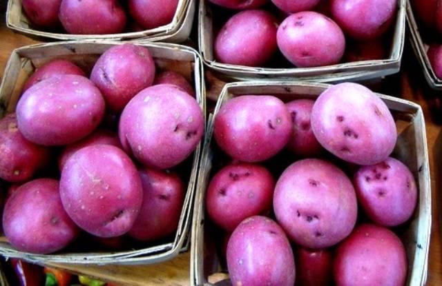 flickr_purple_potatoes