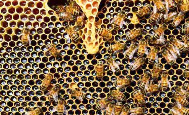 Beekeeping Rural Women Agriculture in india