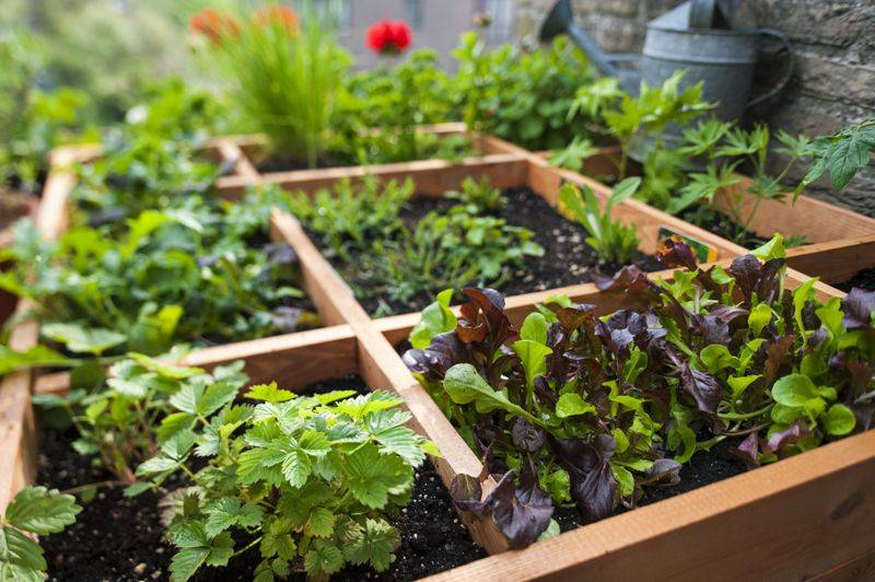 Top 6 Winters Vegetables To Grow In Your Kitchen Garden