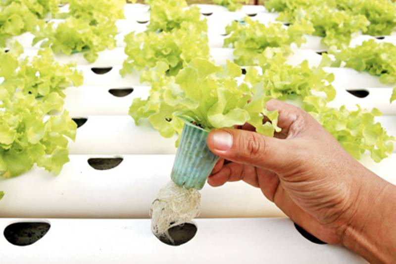 Grow Plants and Vegetables without Soil; Know How?