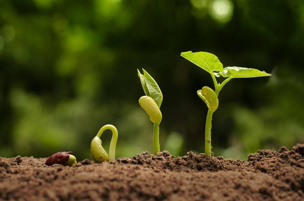 Agriculture Current Affairs  Set-1