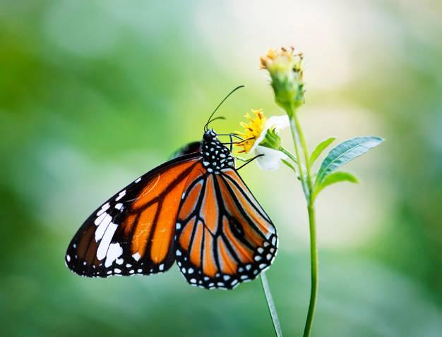 Entomology and Nematology Quiz Set 1