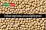 Soybean Turns Range Bound in US and Indian Markets