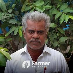 P. Narayanareddy