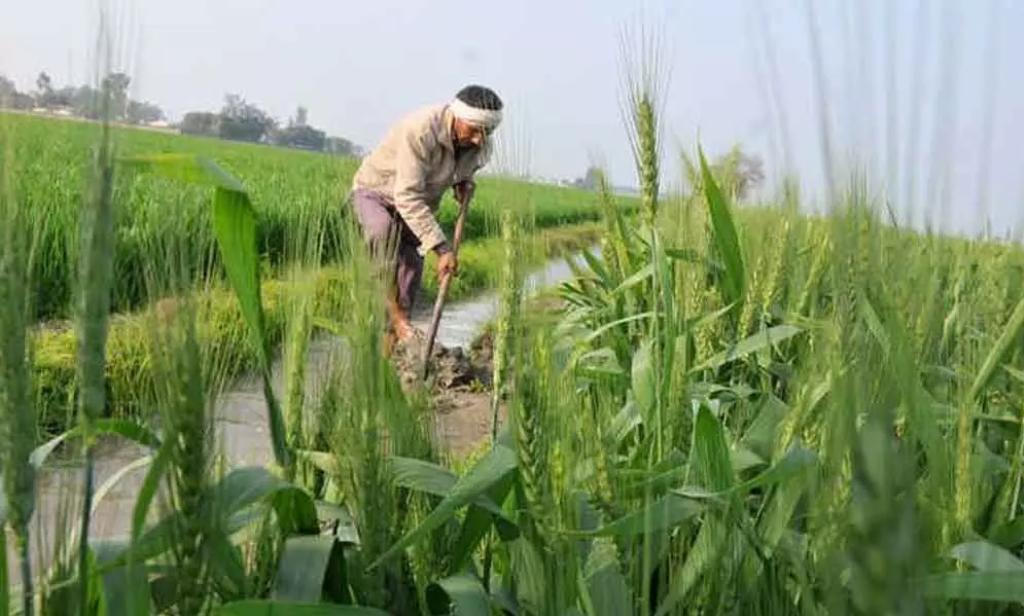 पंजाब शेतकरी