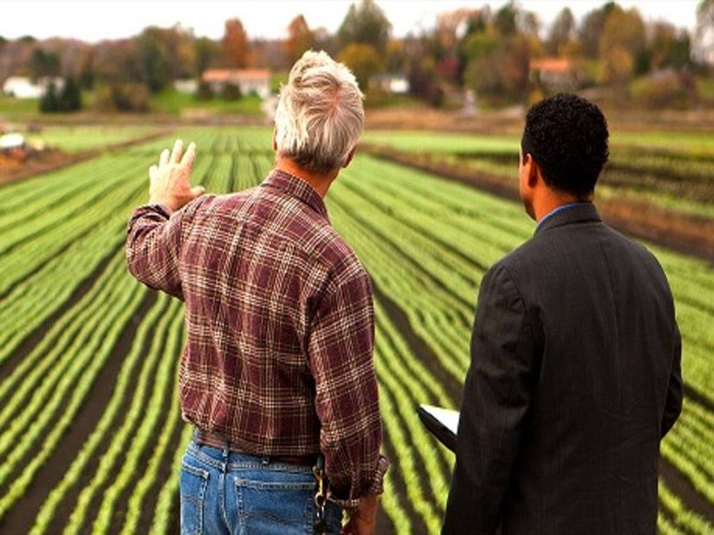 Photo of Current Agricultural Market is offering more and more possibilities for entrepreneurs