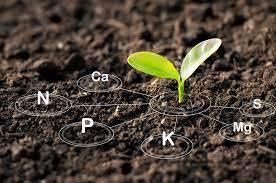 Soil Nutrients Quiz