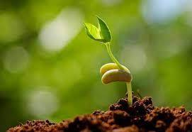 Seed Science - Important Years
