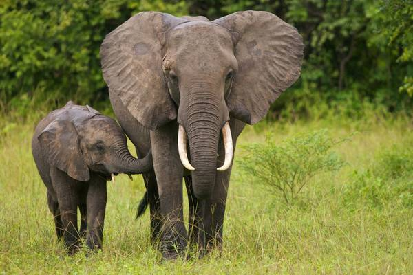 International Elephants Day 2021
