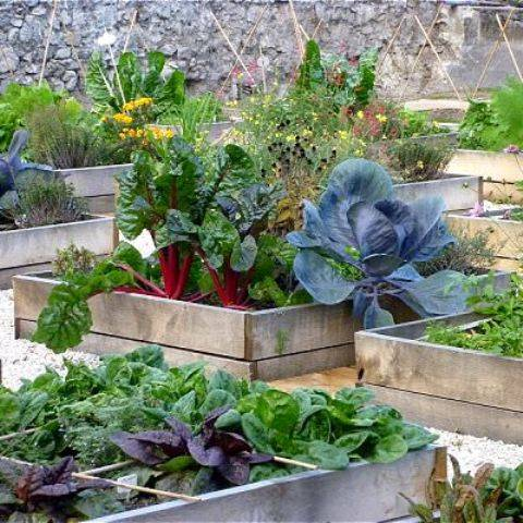 Vegetable Garden In Pots In Your House At Roof Top